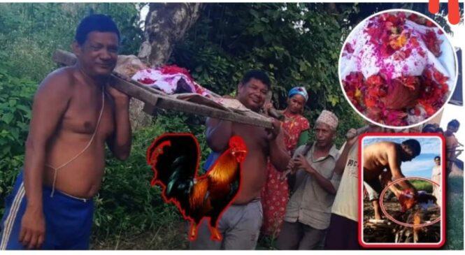 कुखु, राको भाले मर्दा सबै गाउँले गय मलामी, गरियो यसरी दाह' संस्कार (भिडियो सहित)